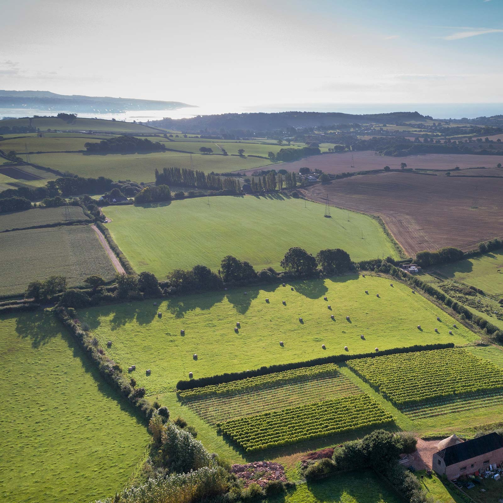 Brickhouse Vineyard in Devon surrounded by beautiful countryside, with view stretching to the South Devon coast.